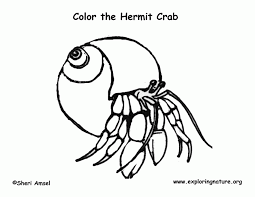 Small Picture Crab Coloring Pages AZ Coloring Pages Hermit Crab Coloring In
