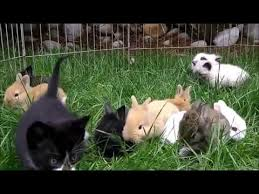 kittens and puppies and bunnies and hamsters.  Hamsters Kittens And Rabbits Playing Together To And Puppies Bunnies Hamsters N