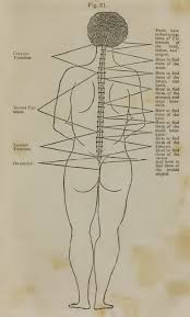 Meric Chart Why Dont Chiropractors Remember Nerve Tracing Tic
