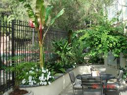 Small Picture Minimalist Small Tropical Garden Design Not necessarily hardy in