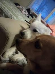 Cute doggies :) - Album on Imgur