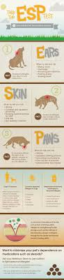 The Most Effective Dog Allergy Medicine