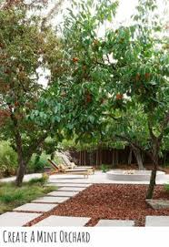Underplanted Stock Photos U0026 Underplanted Stock Images  AlamyUnderplanting Fruit Trees