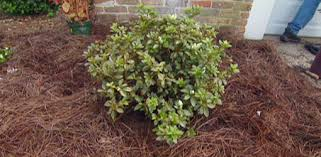 how to plant garden. further information. how to grow plant garden g