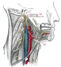 תוצאת תמונה עבור תנועות לשון