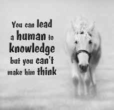 Knowledge Quotes Custom Knowledge Quotes You Can Lead A Human To Knowledge But You Can't