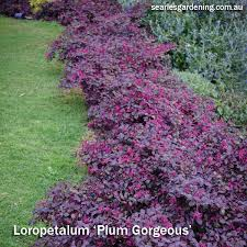 best garden plants. Best Foliage Plants For Garden Colour And Contrast - Plum Gorgeous