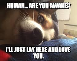 Love Meme - Magic Mind Reader | Trolls | Crazy Funny Pictures | Jokes via Relatably.com