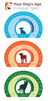 Dog Chart For Age Dog Life Expectancy Dog Age Chart Dog Age In Human Years