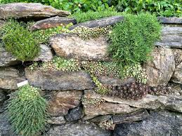 Succulent and moss planted rock wall garden at Wave Hill in Riverdale  (Bronx) NYC.