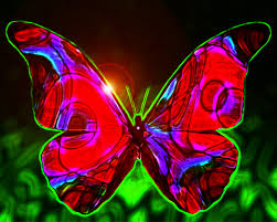 Image result for images of beautiful butterflies