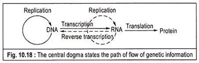 essay on protein synthesis biology central dogma states the mechanism of protein synthesis
