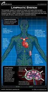 Lymph Flow Chart Diagram Of The Human Lymphatic System Infographic Live