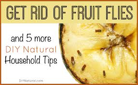 Small Flies In Kitchen Get Rid Of Fruit Flies And 5 More Diy Natural Home Solutions