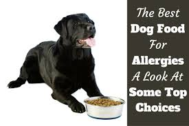 Best Hypoallergenic Dogs List of Food [Common Puppy Nutriment ...