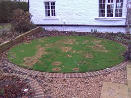 this example shows a severe case of fusarium which appeared on a small lawn after a