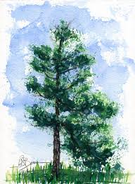 tree painting simple pine tree by john d benson