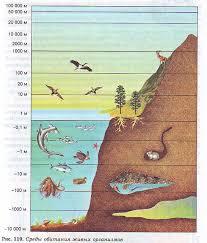Среда обитания организмов и ее факторы Гипермаркет знаний Среда обитания организмов