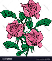 Bouquet Of Three Pink Roses Drawn By Hand Vector Image