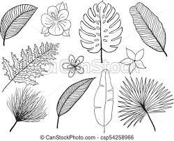 Hand Drawn Tropical Leaves Silhouette Vector Set Set Leaf Exotics Vintage Vector Botanical Illustration