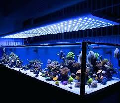 marine aquarium led lighting india lilianduval