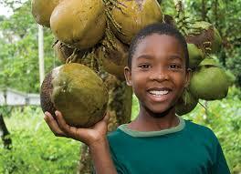 National Fruit  Jamaica Foundation Of HoustonJamaican Fruit Trees