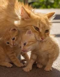 Image result for mother cat with kittens