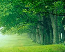 nature wallpapers high resolution green. Perfect Nature Download Wallpaper In Nature Wallpapers High Resolution Green W