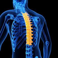 free image Thoracic spondylosis साठी इमेज परिणाम