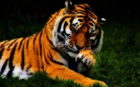 beautiful wild animals wallpapers. Contemporary Wild In Beautiful Wild Animals Wallpapers