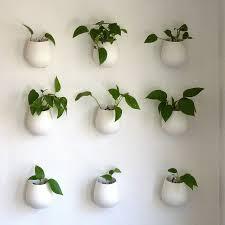 about pothos plants