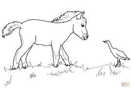 25 Idee Kleurplaat Paard Met Veulen Mandala Kleurplaat Voor Kinderen