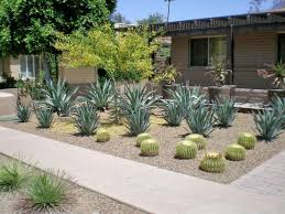 Small Picture How to Desert Landscaping Plants Theme Designs Ideas and Decor
