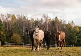 stajnia isengard zar oacute wno dla konia jak i je d ca stajnie