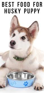 Husky Stock Chart Best Food For Husky Puppy A Guide To Feeding Your Husky Puppy