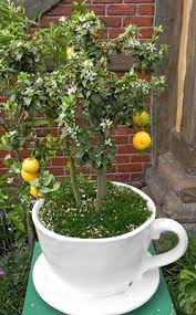 Mulberry List Of Uncommon Cold Hardy Fruit Trees Gardening Zones Fruit Trees For North Florida