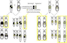 Principles Of Honey Bee Genetics