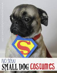 Dog Costume Patterns Unique Dog Halloween Costume Patterns ✓ Halloween Costumes