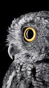 If you're looking for the best owl wallpaper then wallpapertag is the place to be. Owl Iphone Wallpapers Top Free Owl Iphone Backgrounds Wallpaperaccess