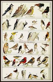 Woodpecker Identification Chart Permanent And Winter
