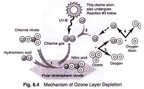 essay on ozone layer depletion top essays atmosphere  mechanism of ozone layer depletion