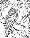 Раскраски с попугаем ара