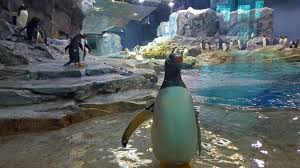 Image result for detroit zoo