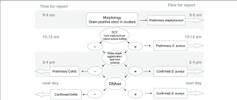Disclosed Microbiology Gram Stain Flow Chart Lactose Gram