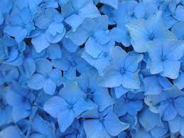 Blue Floral Wallpaper on WallpaperSafari