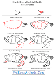 Small Picture How to Draw a Hawksbill Turtle