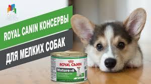 <b>Royal Canin консервы</b> для мелких собак | Обзор <b>консерв</b> для ...