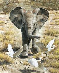 carl brenders hand signed and numbered limited edition print flushing egrets baby elephant