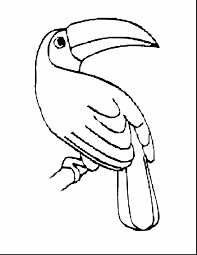 Small Picture amazing toucan coloring pages printable with toucan coloring page