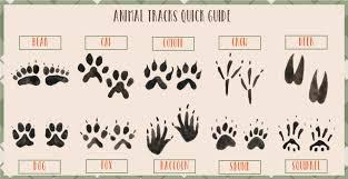 Free Printable Animal Tracks Flashcards Animal Footprints